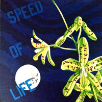 SPEED OF LIFE (2LP)